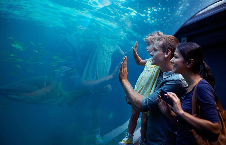Monterey Bay Aquarium Package at Hotel Pacific Street Monterey, California