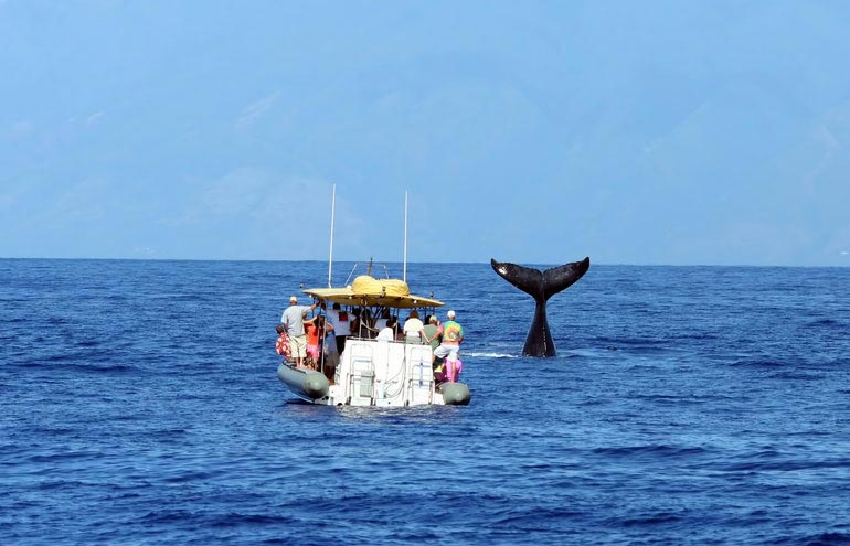Whale Watching Package at Hotel Pacific Street Monterey California