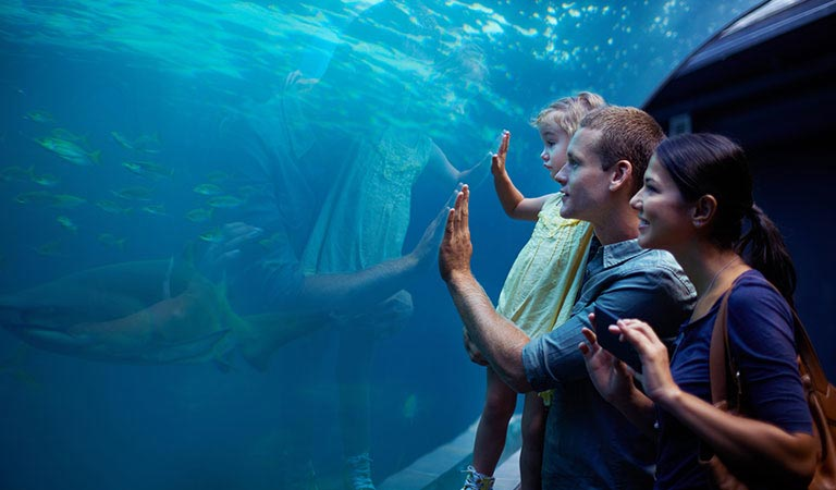 Monterey Bay Aquarium Package at Hotel Pacific Street Monterey California